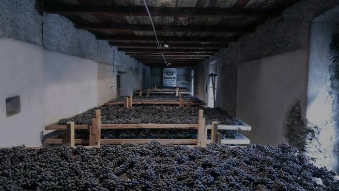 Appassimento delle uve Sforzato
